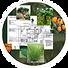 Planting plan1.png