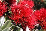 flower-3166131__340.jpg