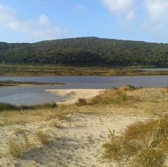 Spirits Bay wetland