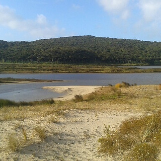 Spirits Bay wetland