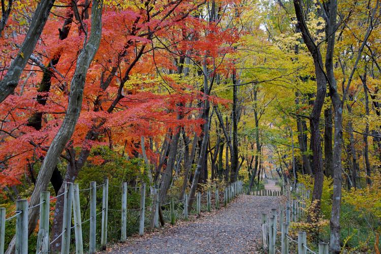 嵐山渓谷紅葉まつり