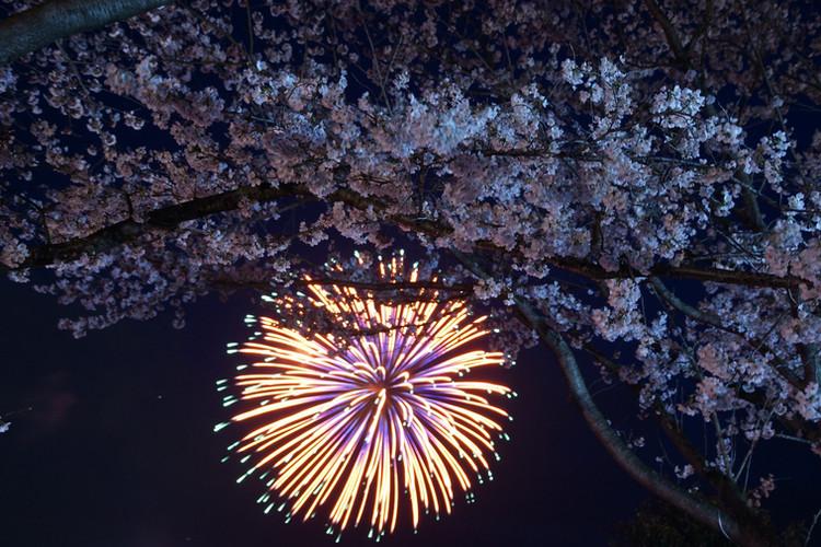 嵐山さくらまつり花火大会