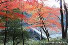 冠水橋 - コピー.jpg