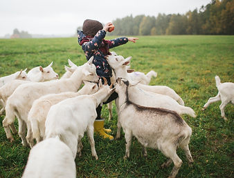 Kid%20Feeding%20Goats_edited.jpg