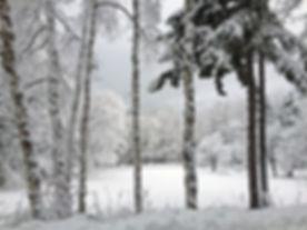 STORER winter orchard.jpeg