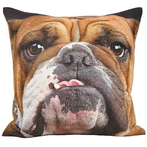 Animal Bulldog