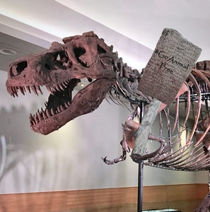 A fossilized skeleton of Tyranosaurus rex holds up a sign saying #GoAnimalFree. Perhaps he's looking for vegan medicine?
