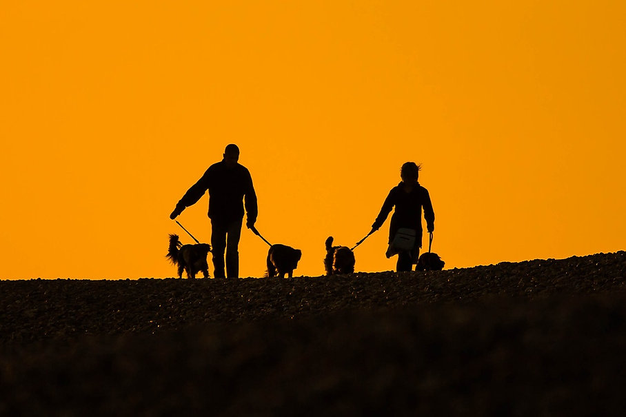 Hunde in Harmonie.jpg