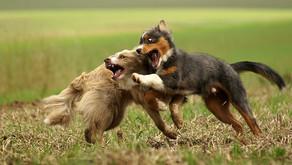Hundebegegnung und Sozialisation