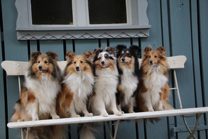 Quinta, Lilu, Adele, Joice, Daisy
