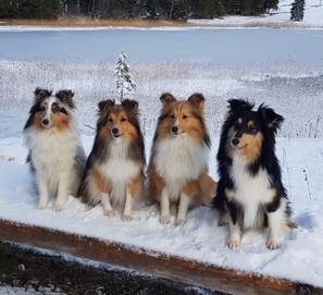 Adele, Luna, Lilu, Joice
