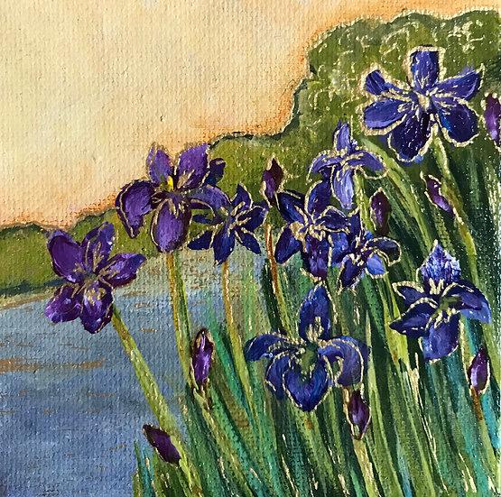 Biltmore Irises