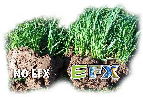 EFX_Grass_Comparison.jpg