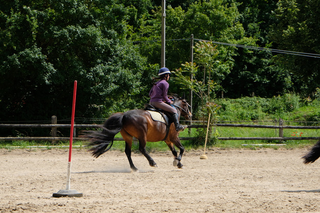 Concours equitation