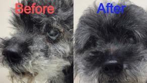 犬の皮膚病とMMD療法