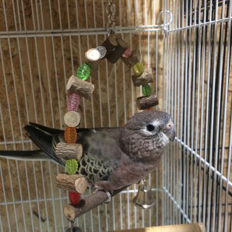 鳥の発情抑制について