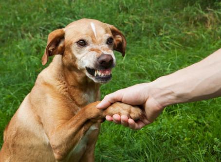 子犬の「社会化」