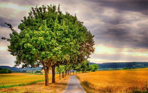 landscape-3521472_1920_edited.jpg
