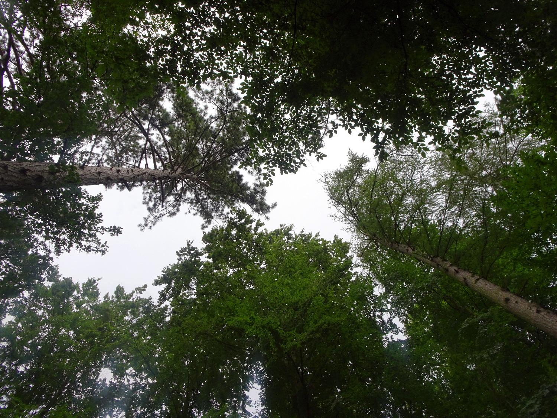 Waldbaden in Nordbaden