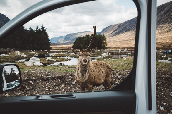 Crosscamp campaign 2019 - a roadtrip from Germany to Scotland