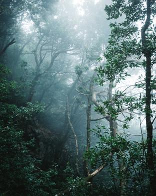 One week on Madeira island in 2019