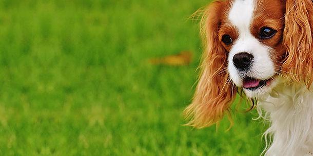 5-coisas-sobre-cachorros-filhotes.jpg