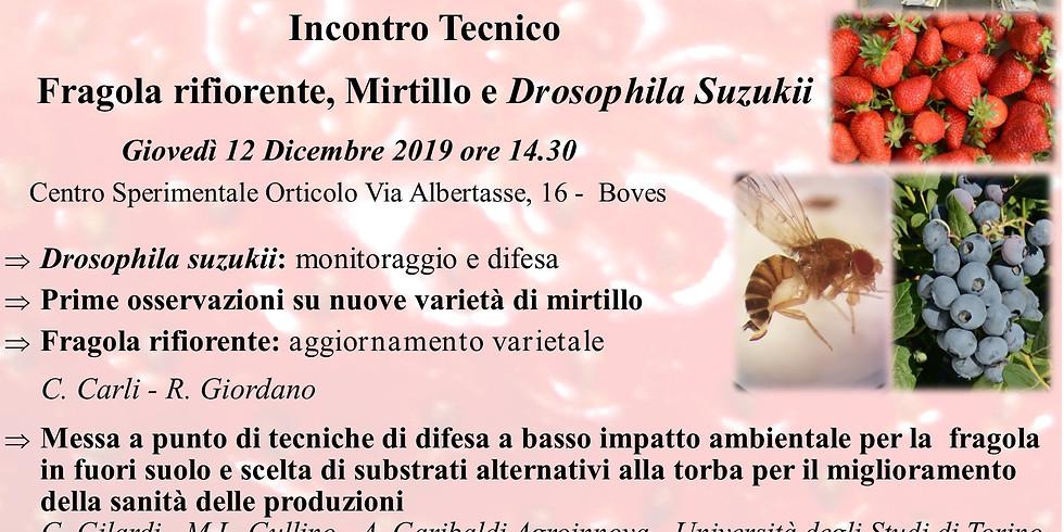 Incontro tecnico fragola, mirtillo e Drosophila Suzukii