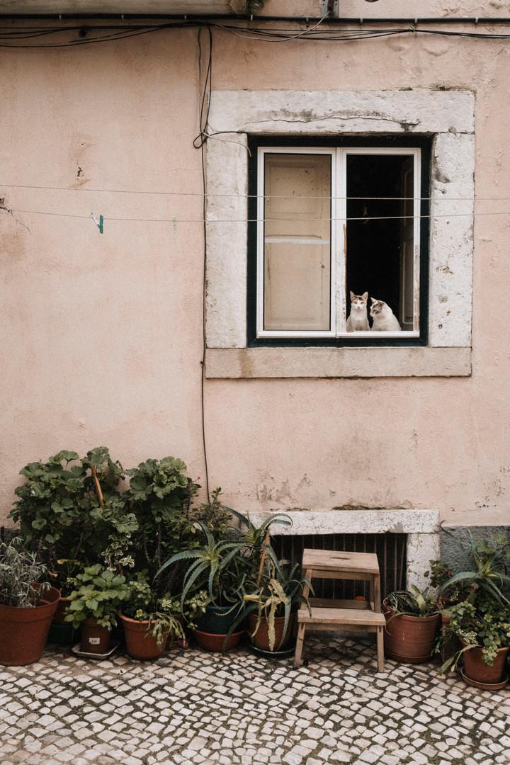 Lisboa16.1_AlexKleis (25 von 92).jpg