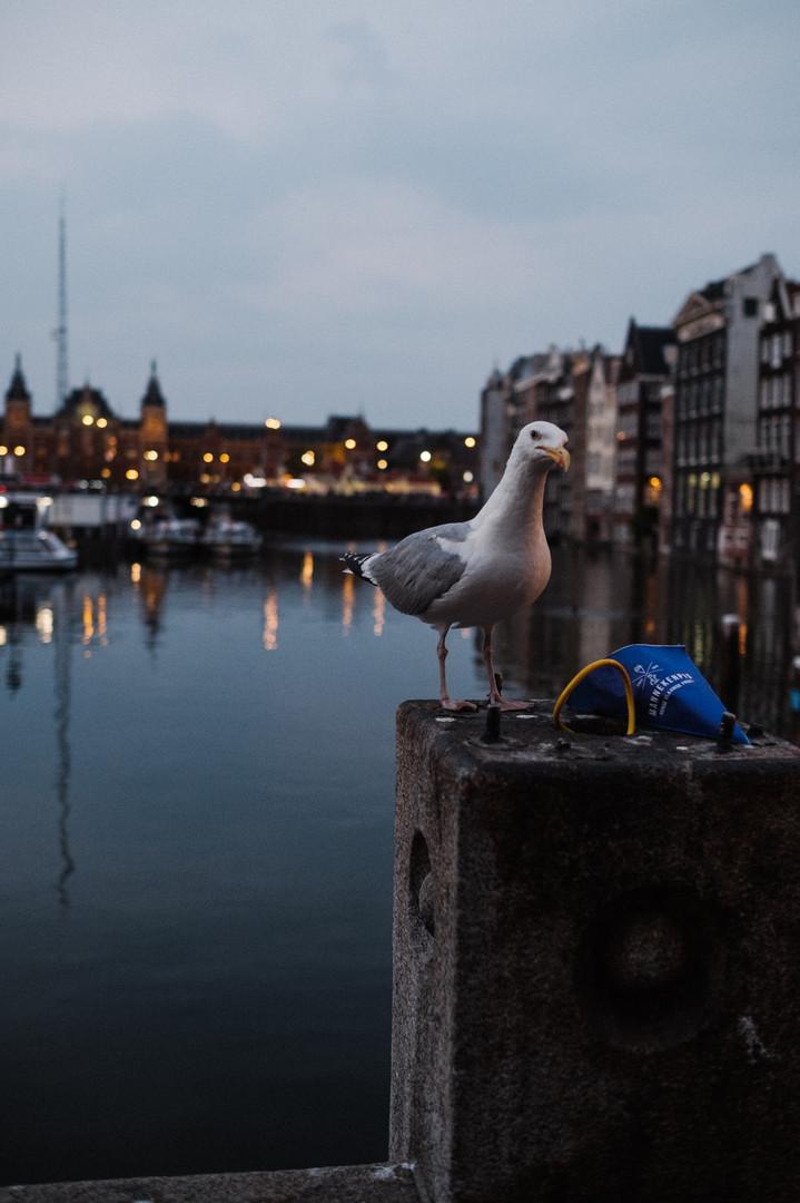 Amsterdam_AlexKleis (47 von 47).jpg