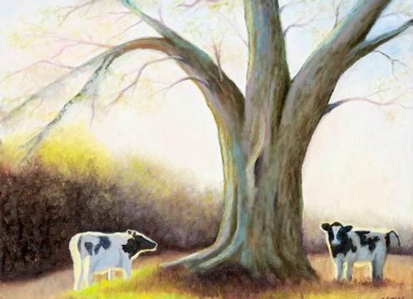Backlit Cows