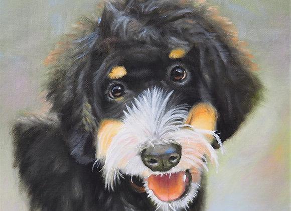 Bermese Doodle Pet Portrait