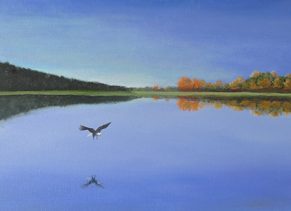 Eagle Over Blue Waters