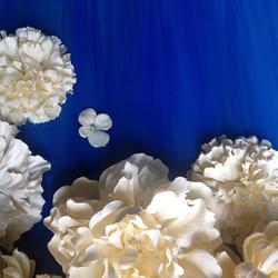 Bloom, detail