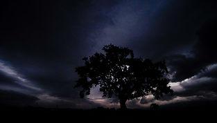Oak Tree-9.jpg