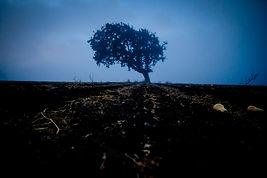 Oak Tree-25.jpg