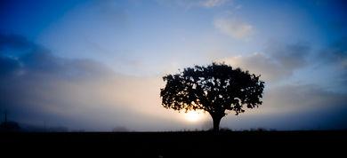 Oak Tree-32.jpg
