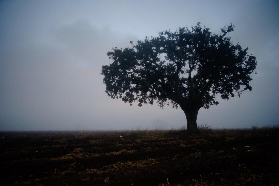 Oak Tree-22.jpg