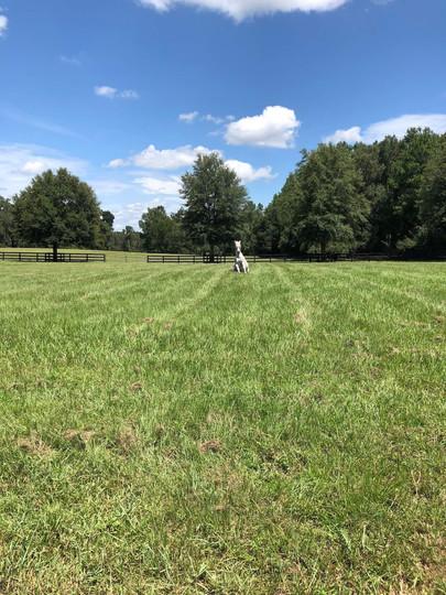 winter-oak-farm-white-horse-field.jpg