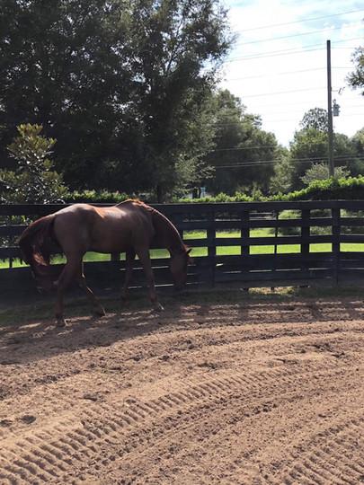 winter-oak-farm-brown-horse-arena.jpg