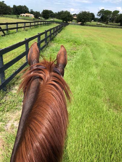 winter-oak-farm-green-field-horse-view.j