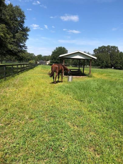 winter-oak-farm-brown-horse-bucket.jpg