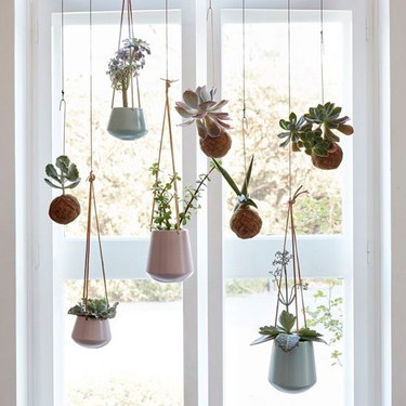 Hanging Succulents in Window