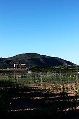 Organic farmland.JPG