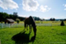 Lara Lutz Whidbey Island Equine Massage