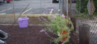 Pre-K urban gardeners.jpg