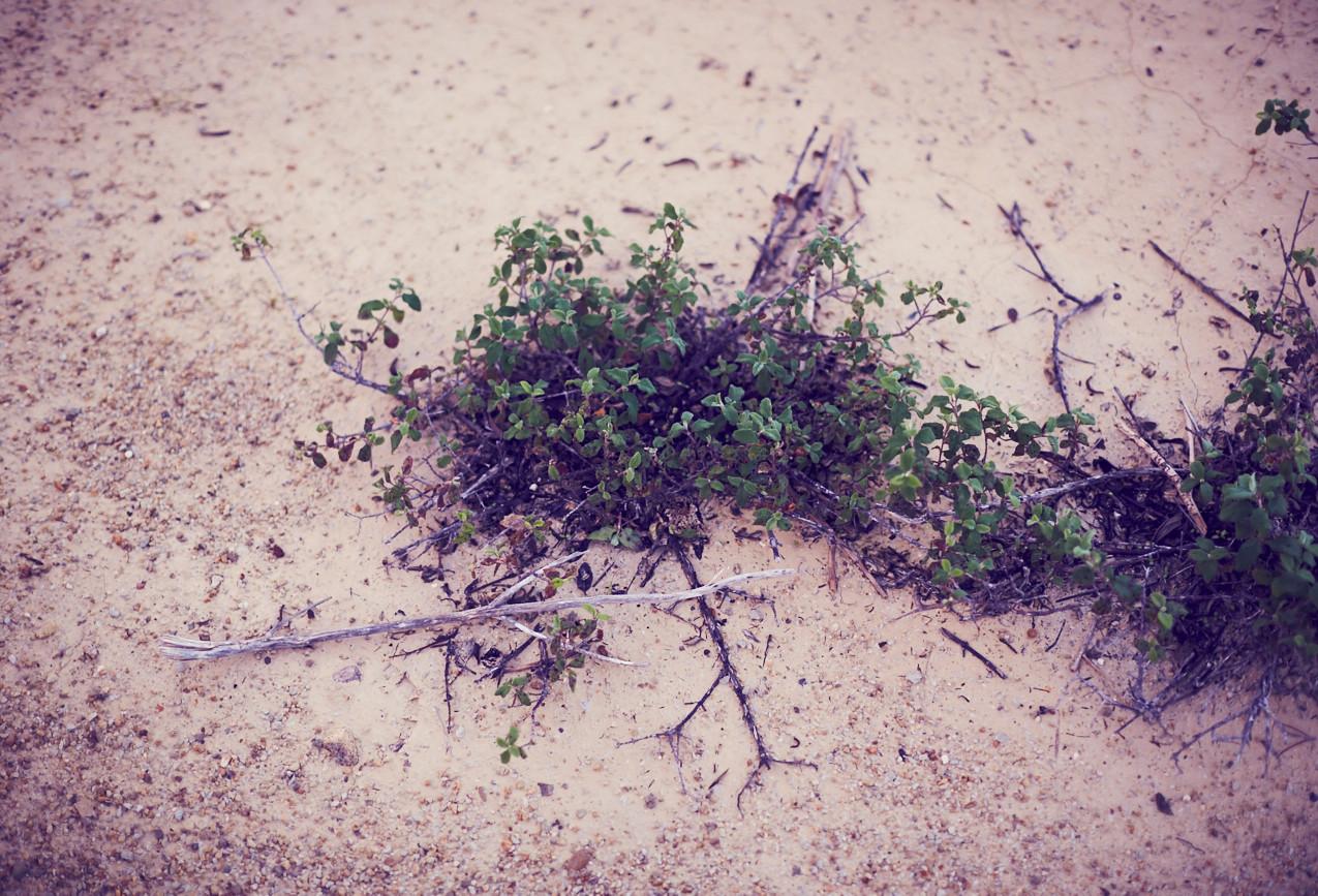 _30B0036-Mar Photography.es