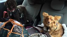 Resan med hundarna i min lilla bil från Schweiz till Gotland-The trip with the dogs in my little car
