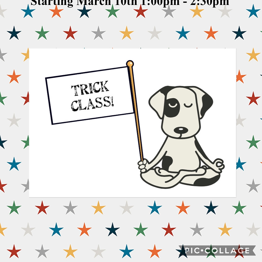 Do More with Your Dog - Trick Class