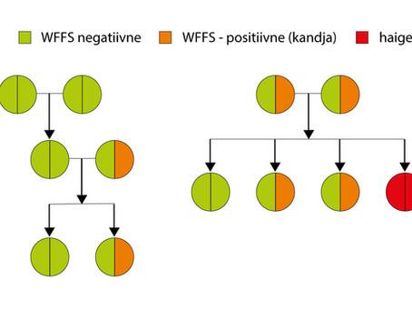 Warmblood Fragile Foal Syndrome (WFFS) ehk soojaverelise hapra varsa sündroom