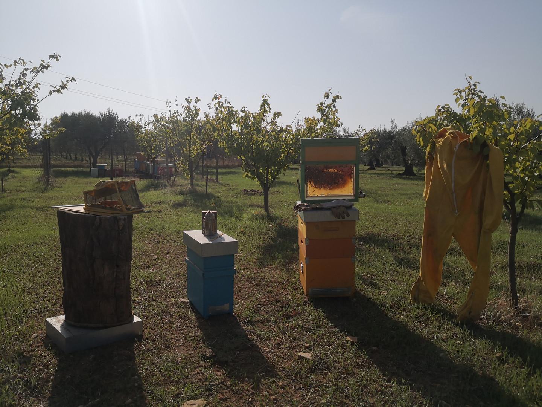 Come si allevano le api